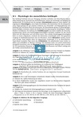 Sprachevolution: Die Voraussetzungen für die Sprechfähigkeit des Menschen Preview 2