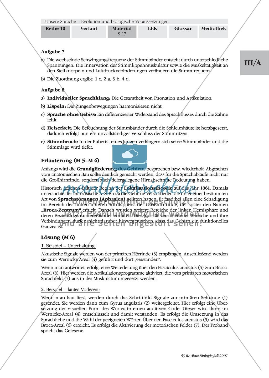 Sprachevolution: Die Voraussetzungen für die Sprechfähigkeit des Menschen Preview 3