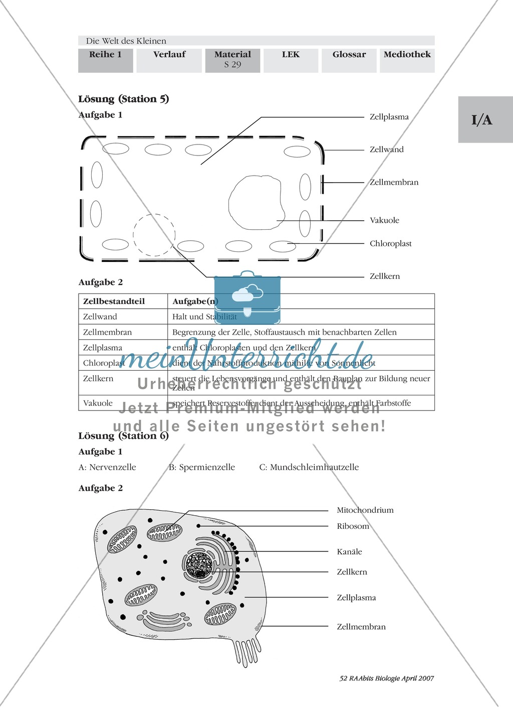 Modell einer Pflanzenzelle: Text Preview 4