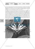 Gefährdung und Schutz der Schmetterlinge Preview 3