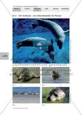 Gefährdungen des Seehundes Preview 2