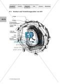 Enzymhemmung als Therapieansatz zur Behandlung von HIV kennenlernen Preview 2