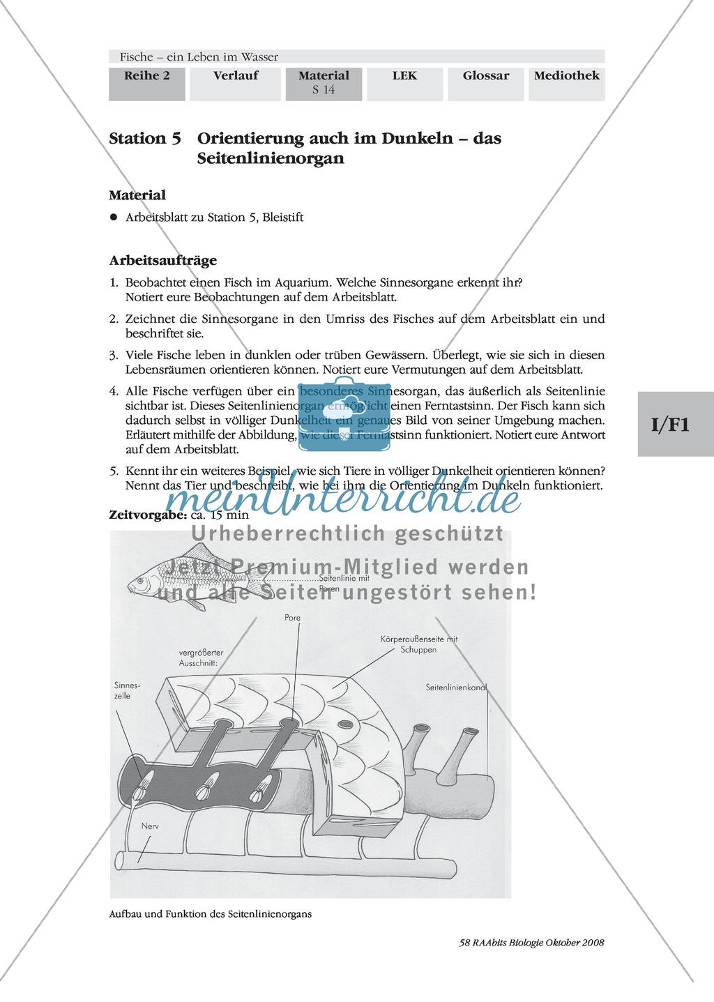 Beautiful Literaturkreis Arbeitsblatt Pdf Composition - Kindergarten ...