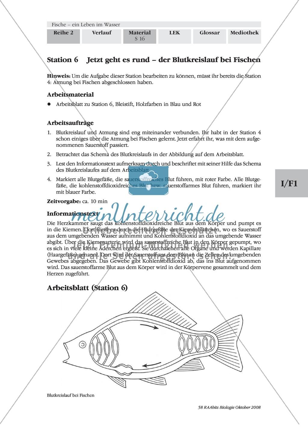 Ungewöhnlich Atmung Arbeitsblatt KS3 Ideen - Mathe Arbeitsblatt ...