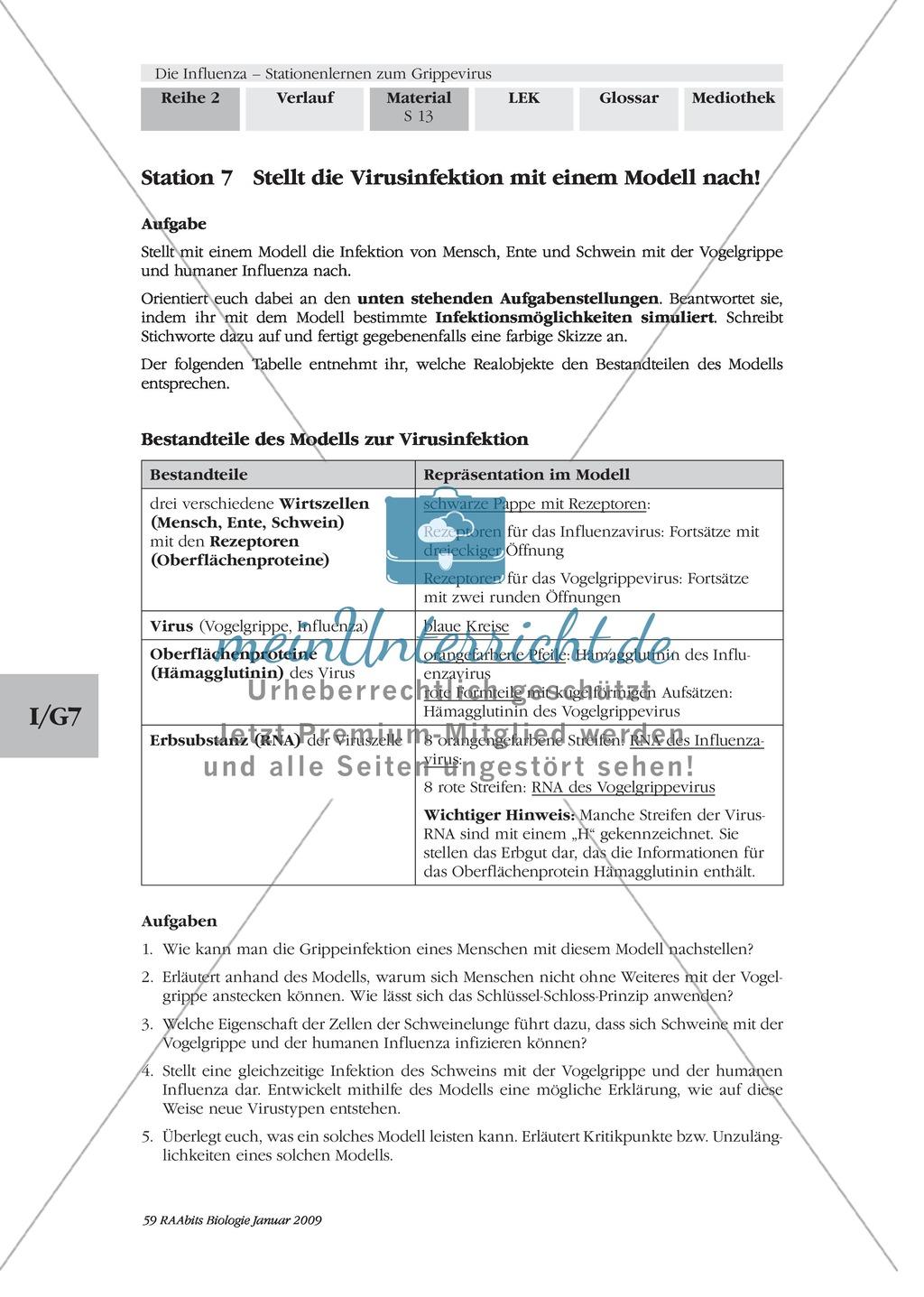 Stationsarbeit zum Thema Influenza mit Themen zur Vogelgrippe, Viren und Fieber Preview 11