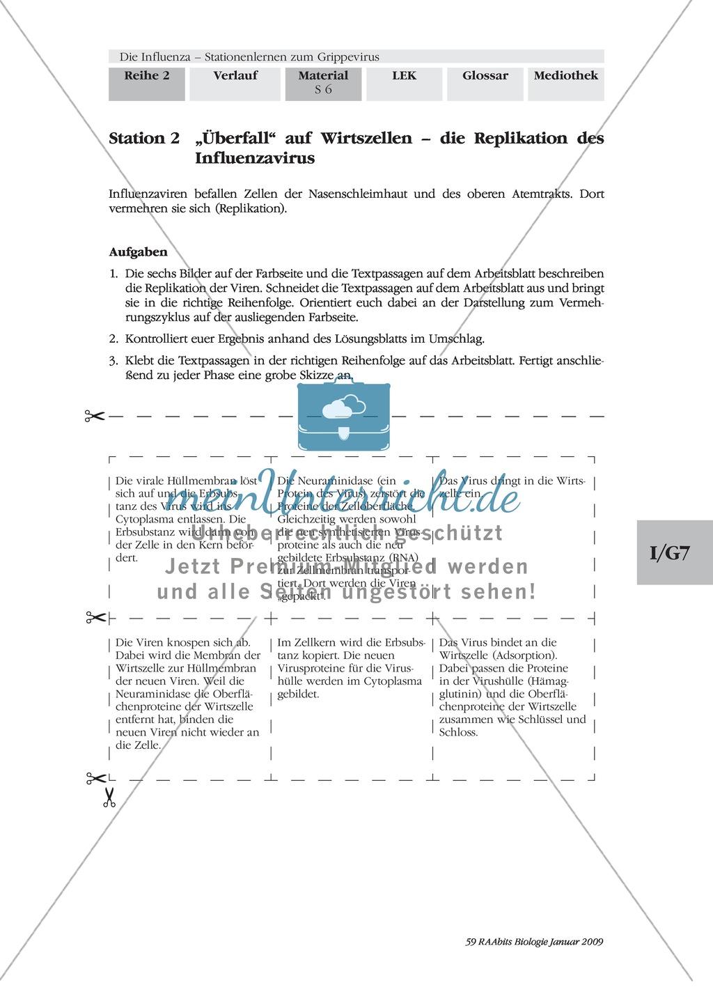 Definition, Beschreibung und Vermehrungskreislauf von Viren am ...