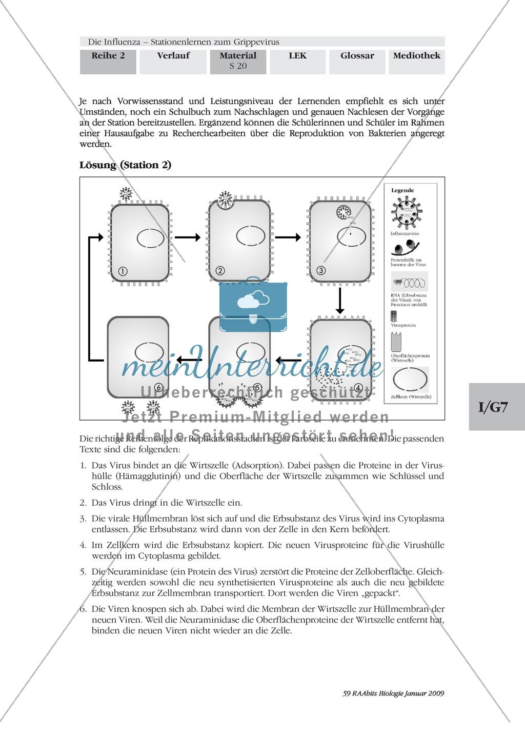 Definition, Beschreibung und Vermehrungskreislauf von Viren am Beispiel Influenza und Vogelgrippe: Textarbeit, Bildbeschreibung, Skizzieren, Eigenrecherche Preview 6