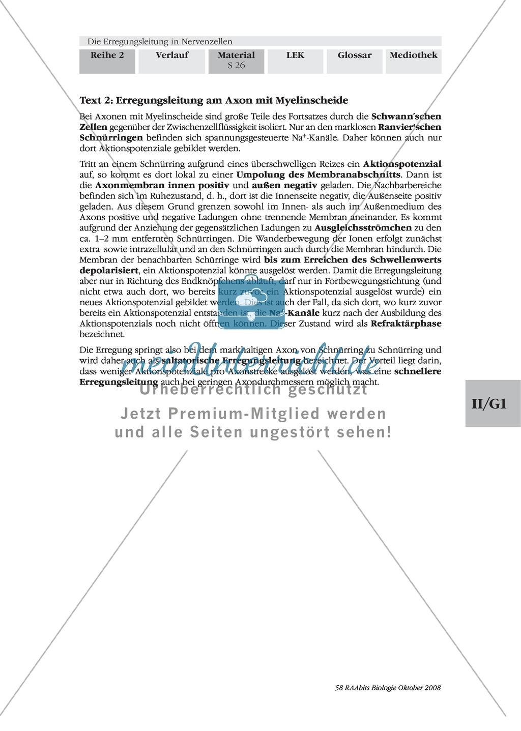 Die Erregungsleitung am Axon selbstständig erklären: Stärkung der Textarbeit und Kommunikationsfähigkeit im Biologie-Unterricht Preview 3