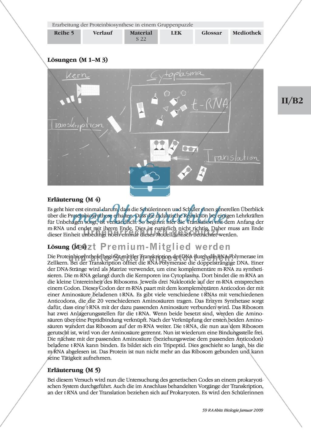 Einführung in die Proteinbiosynthese anhand eines Modells Preview 10