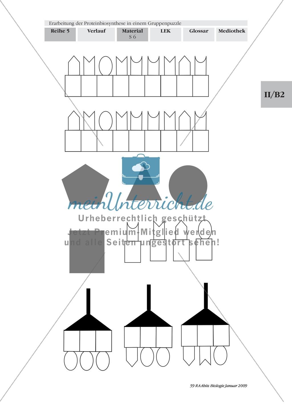 Einführung in die Proteinbiosynthese anhand eines Modells Preview 6