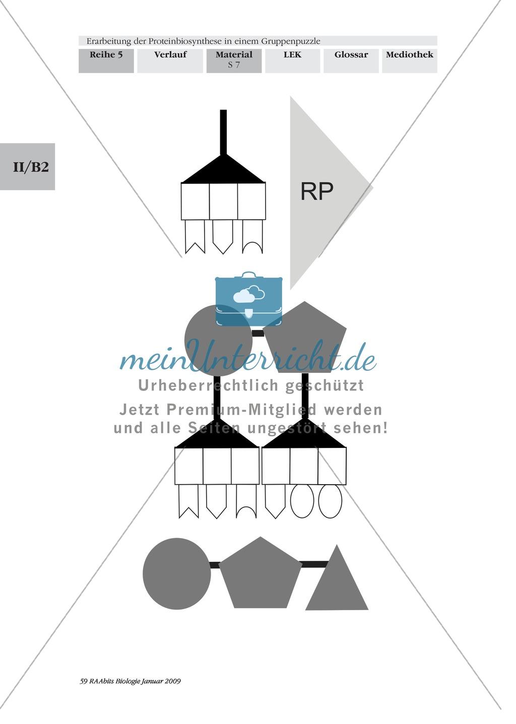 Einführung in die Proteinbiosynthese anhand eines Modells Preview 7