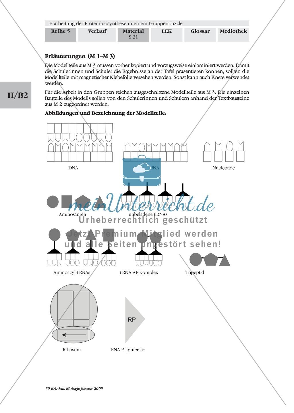 Einführung in die Proteinbiosynthese anhand eines Modells Preview 8