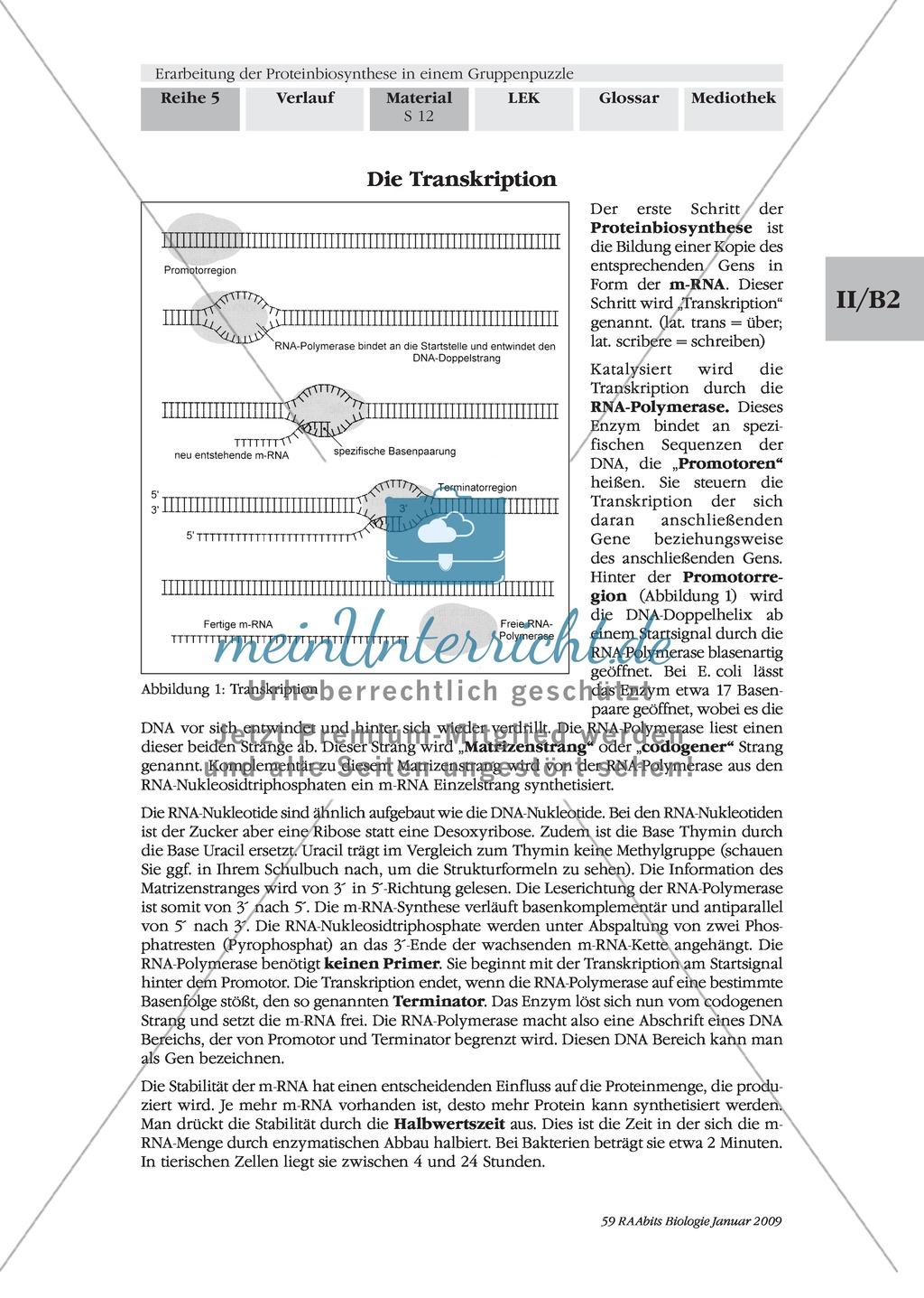 Die Teilprozesse der Proteinbiosynthese: Mini-Gruppenpuzzle Preview 1