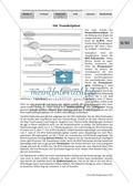 Die Teilprozesse der Proteinbiosynthese: Mini-Gruppenpuzzle Preview 2