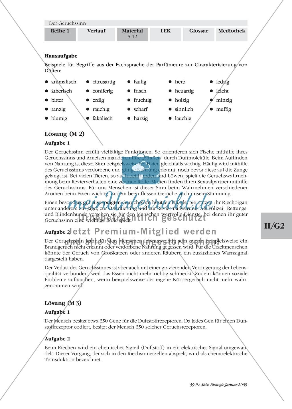 Nase: Bedeutung des Geruchssinns: Text Preview 2