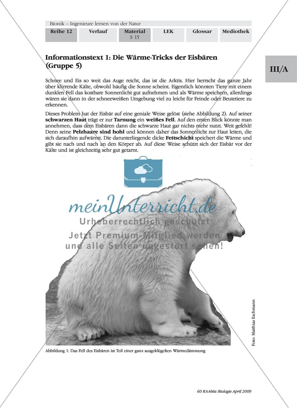 Bionik: Die Wärmedämmung von Eisbären als Vorbild für Hausfassaden Preview 1