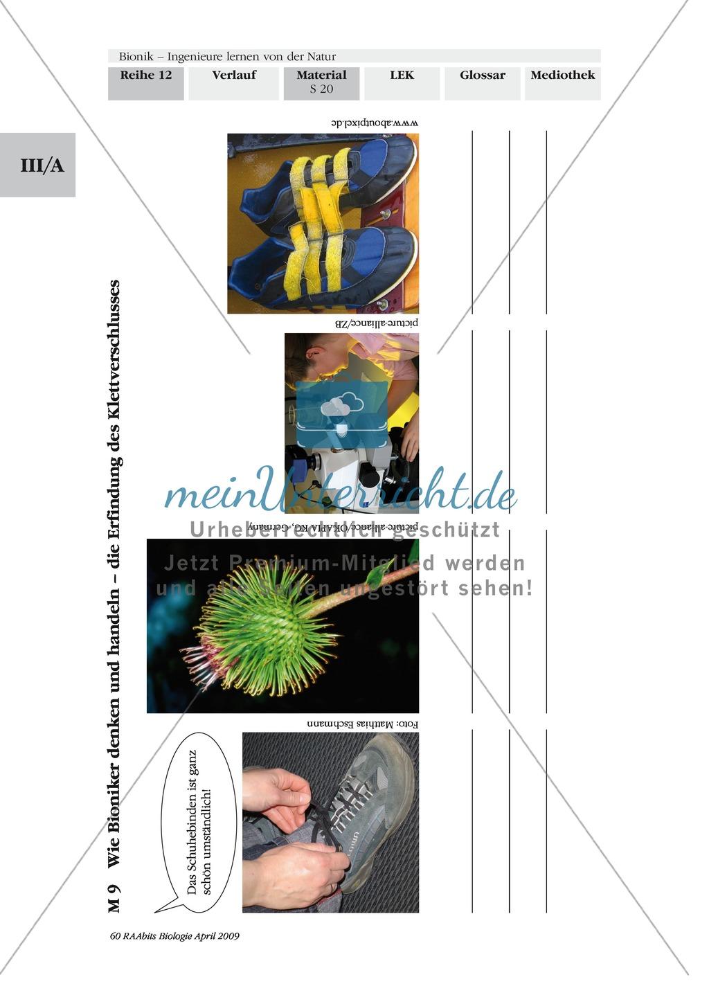 Bionik: Die Vorgehensweise der Bioniker am Beispiel der Erfindung des Klettverschlusses Preview 1