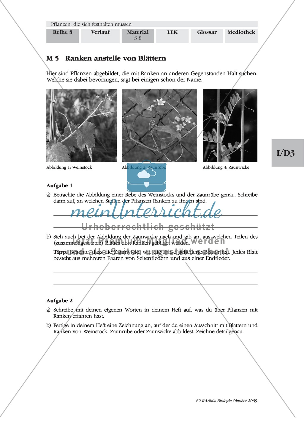 Kletterpflanzen: Ranken als Kletterorgane Preview 2
