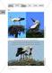 Das Leben der Storche am Beispiel ihrer Nahrung, Nahrungssuche und Fortpflanzung Thumbnail 5