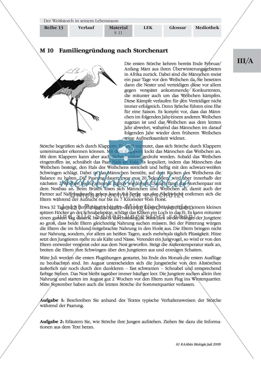 Das Leben der Storche am Beispiel ihrer Nahrung, Nahrungssuche und Fortpflanzung Preview 6