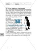 Stationenlernen: Klimawandel und Folgen für Flora und Fauna Thumbnail 10