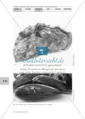 Klimawandel: Wattenmeer - Flora und Fauna Preview 6
