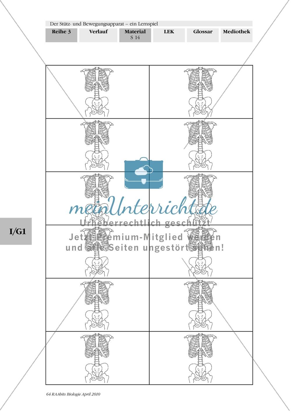 Lernspiel zum Stütz- und Bewegungsapparat: Spielanleitung, Spielfeld, Skelett-Puzzleteile, Fragen, Spielkarten, Röntgenbilder Kontrollbogen, Lösungsbogen Preview 12