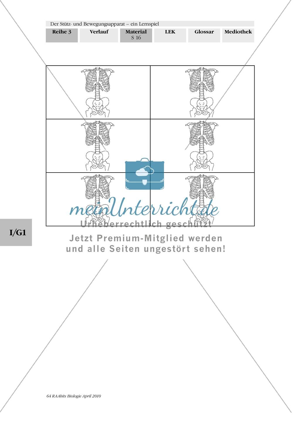 Lernspiel zum Stütz- und Bewegungsapparat: Spielanleitung, Spielfeld, Skelett-Puzzleteile, Fragen, Spielkarten, Röntgenbilder Kontrollbogen, Lösungsbogen Preview 14