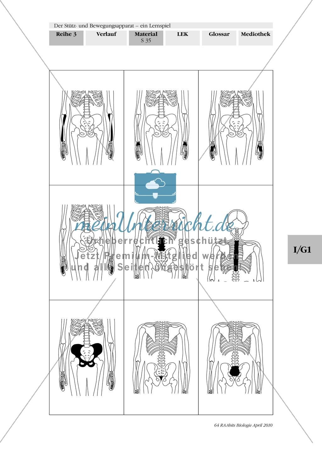 Lernspiel zum Stütz- und Bewegungsapparat: Spielanleitung, Spielfeld, Skelett-Puzzleteile, Fragen, Spielkarten, Röntgenbilder Kontrollbogen, Lösungsbogen Preview 33