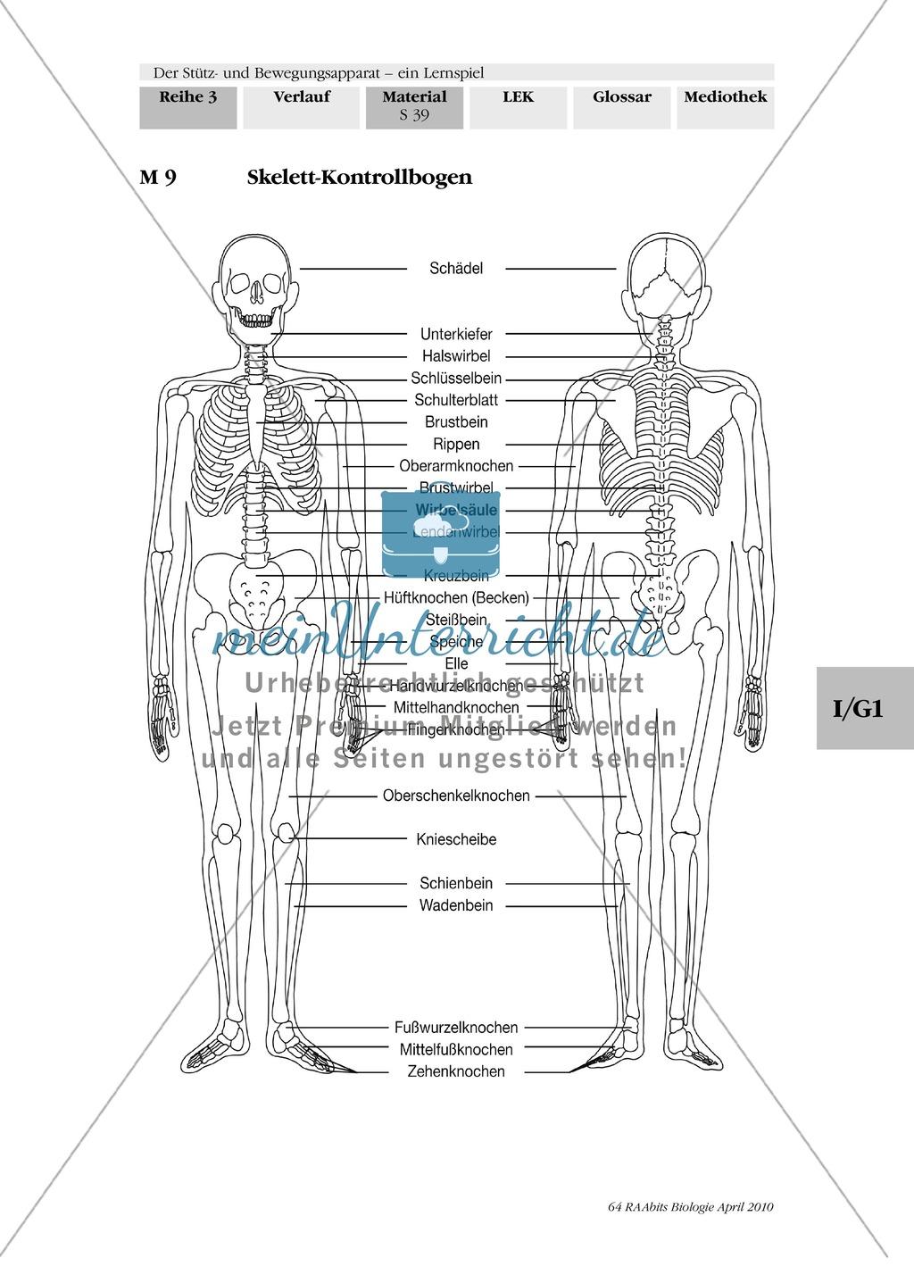 Lernspiel zum Stütz- und Bewegungsapparat: Spielanleitung, Spielfeld, Skelett-Puzzleteile, Fragen, Spielkarten, Röntgenbilder Kontrollbogen, Lösungsbogen Preview 37