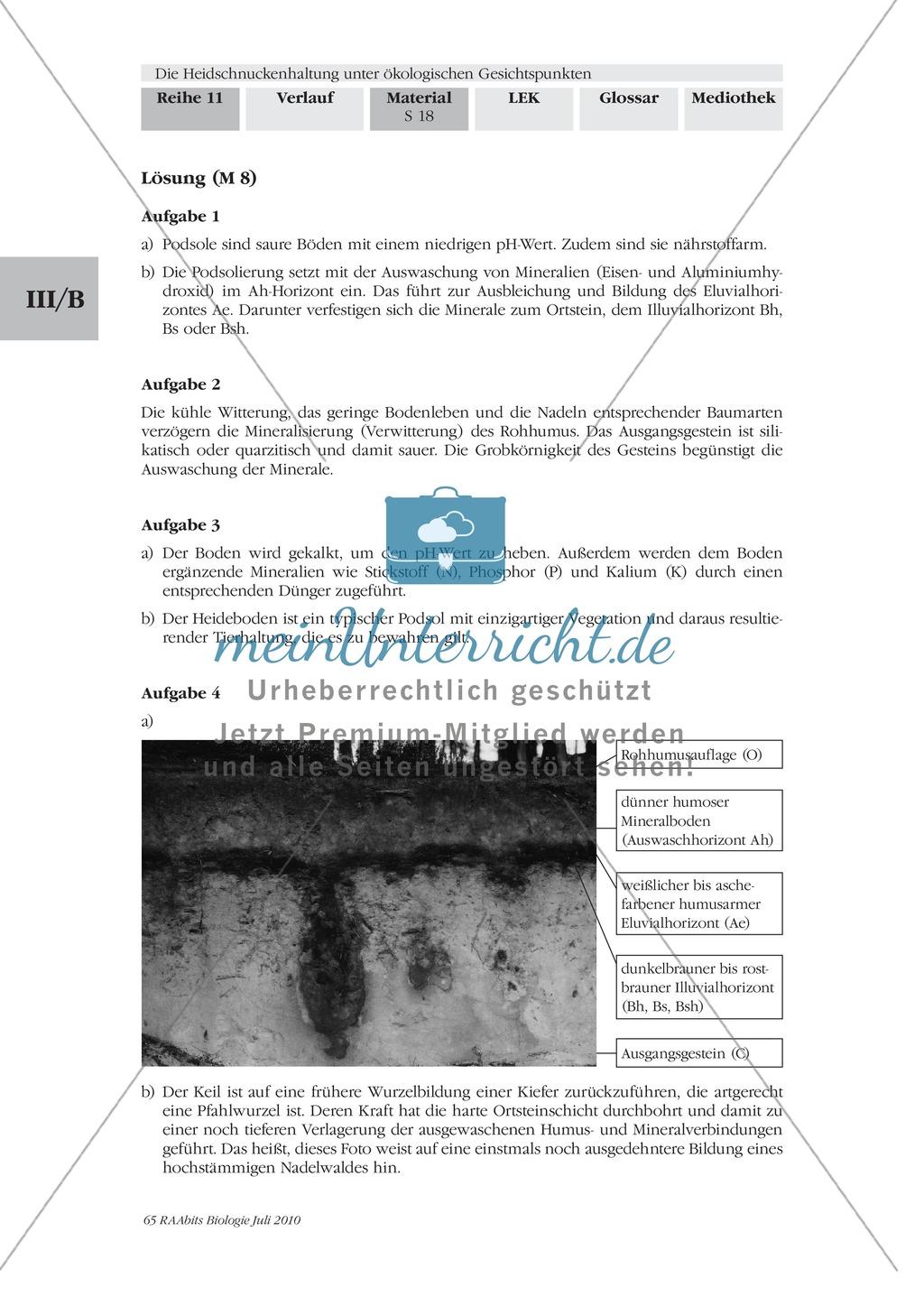 Das Ökosystem Heide und die Rolle der Heidschnucken bei der Beweidung Preview 10