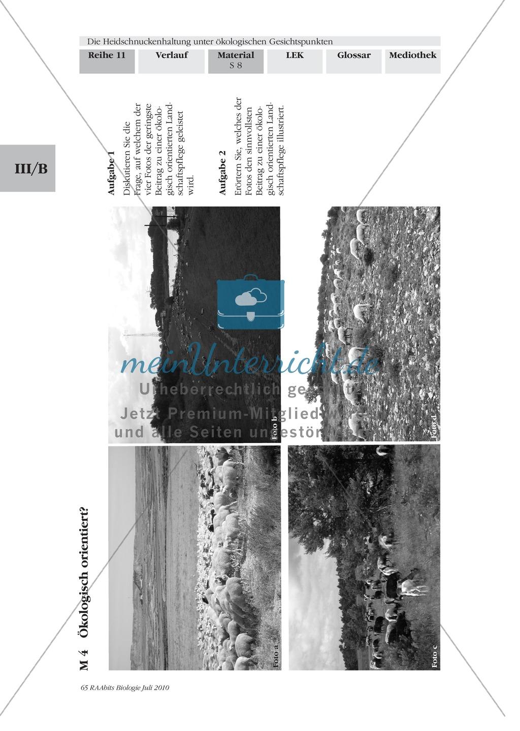 Das Ökosystem Heide und die Rolle der Heidschnucken bei der Beweidung Preview 0
