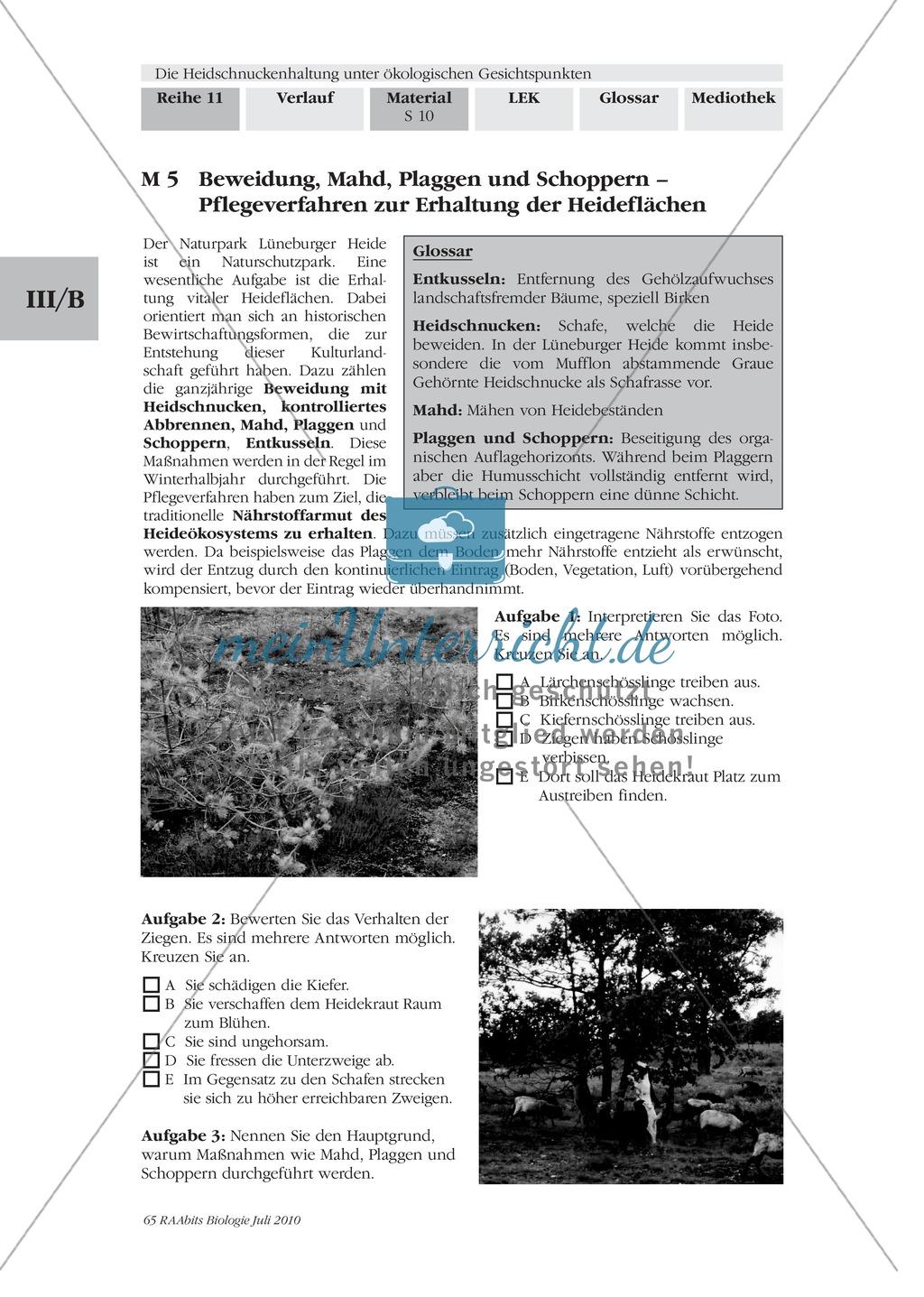 Das Ökosystem Heide und die Rolle der Heidschnucken bei der Beweidung Preview 2