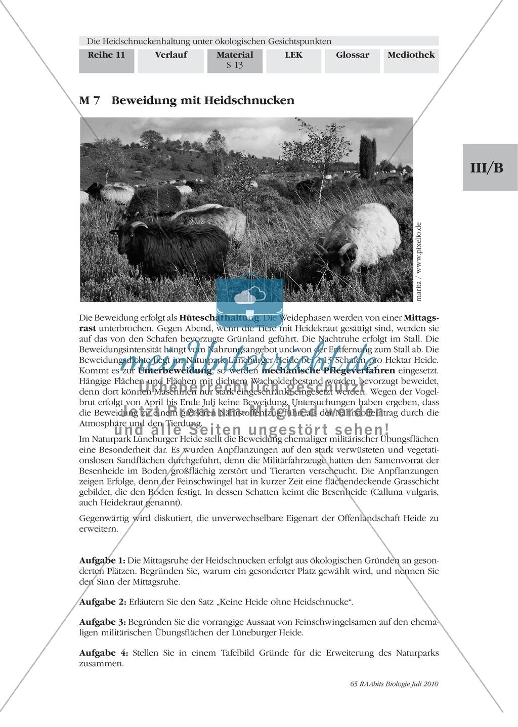 Das Ökosystem Heide und die Rolle der Heidschnucken bei der Beweidung Preview 5