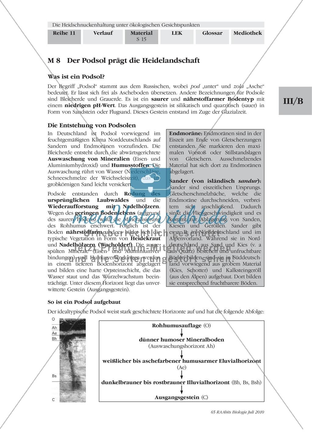 Das Ökosystem Heide und die Rolle der Heidschnucken bei der Beweidung Preview 7