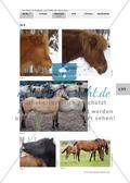 """Pferde """"sprechen"""" ohne Worte Preview 3"""