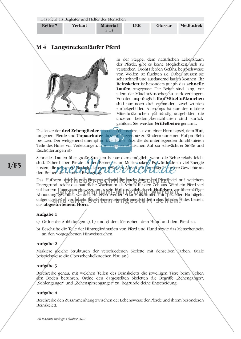 Das Pferd: Langstreckenläufer - Anpassung an die Lebensweise in der ...