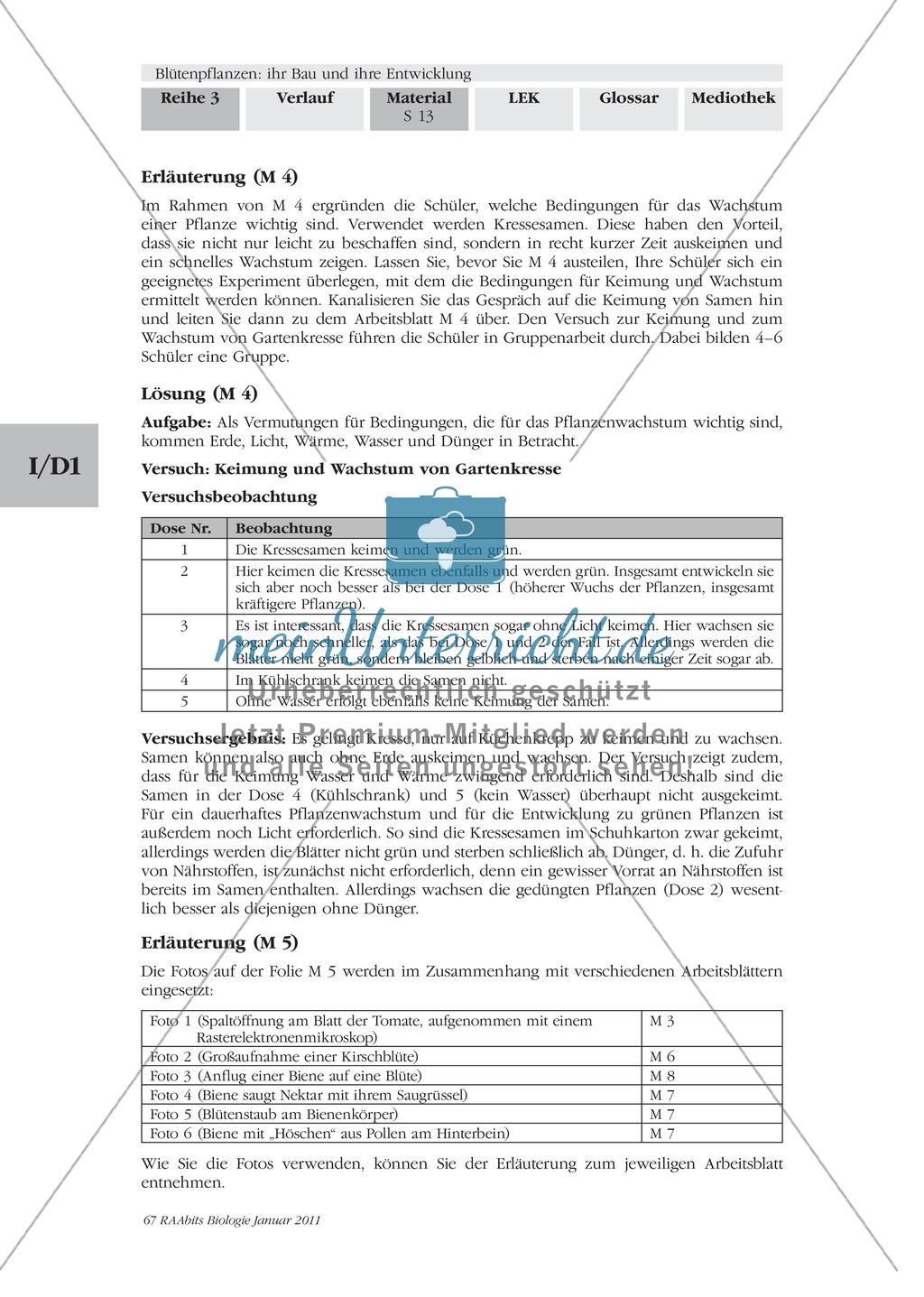 Blütenbau Tulpe, Kirsche: Text, Zeichnen Preview 1