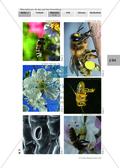 Befruchtung von Blütenpflanzen: Text, Zeichnen, Beschriften Preview 3