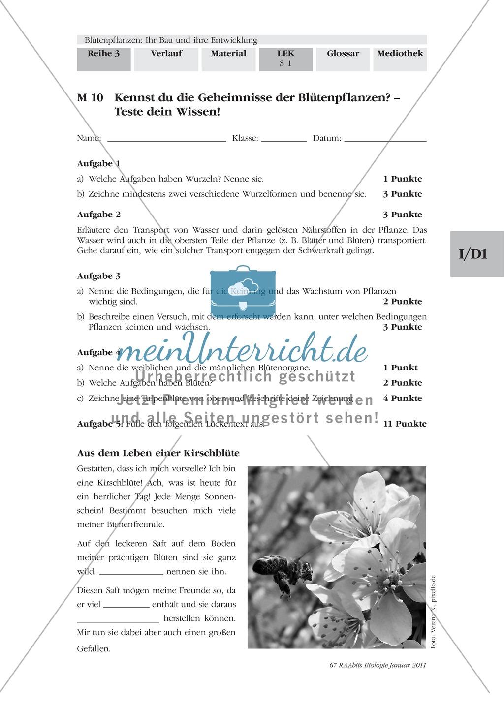 LEK Blütenpflanzen: Lückentext, Zeichnen Preview 0
