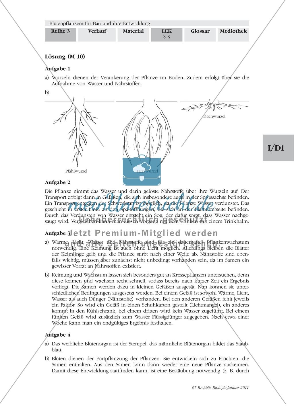 LEK Blütenpflanzen: Lückentext, Zeichnen Preview 2