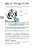 LEK Blütenpflanzen: Lückentext, Zeichnen Thumbnail 3