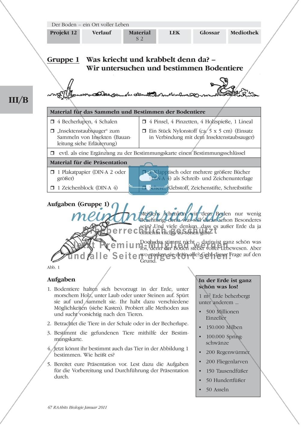 Bodentiere: Untersuchung und Bestimmung, Steckbrief, Exkursion, Präsentation Preview 0