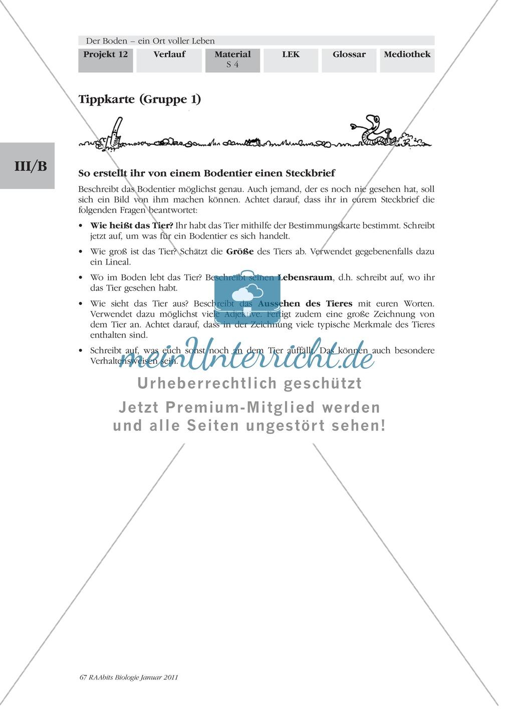 Bodentiere: Untersuchung und Bestimmung, Steckbrief, Exkursion, Präsentation Preview 2