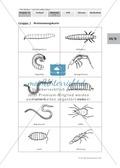 Bodentiere: Untersuchung und Bestimmung, Steckbrief, Exkursion, Präsentation Thumbnail 3