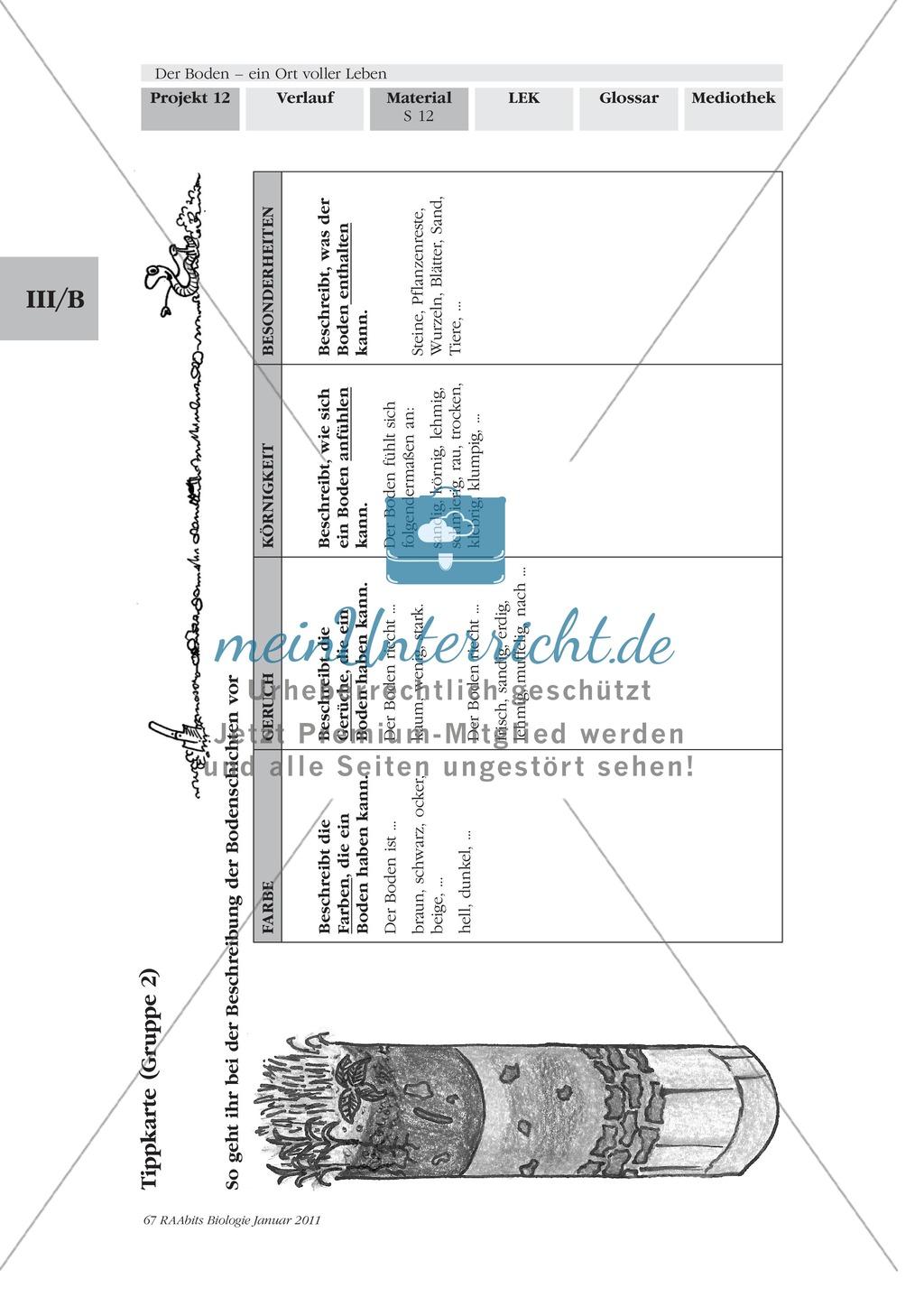 Bodenprofil: Beschaffenheit des Bodens, Bodenschichten, Exkursion, Präsentation Preview 3