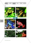 Biologie, Bau und Funktion von Biosystemen, Tier, pfeilgiftfrösche, Regenwald