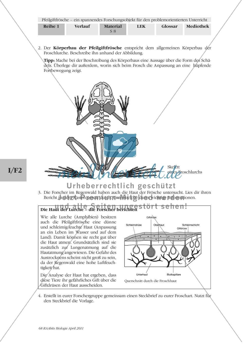 Merkmale und Eigenschaften von Fröschen am Beispiel von Pfeilgiftfröschen: Forschungsauftrag Preview 1