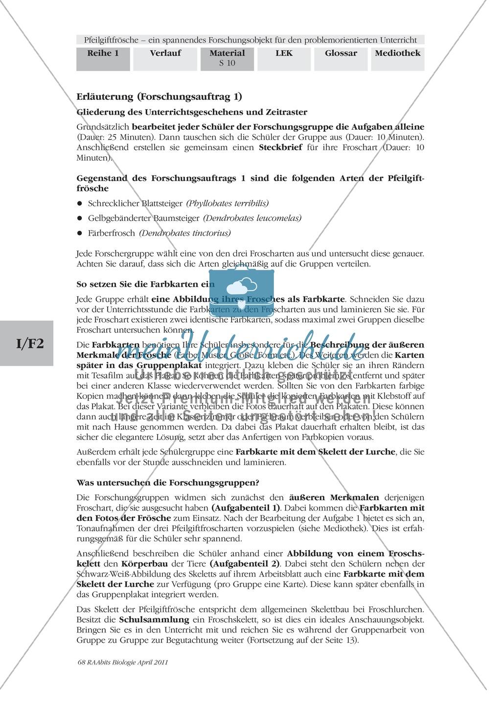 Merkmale und Eigenschaften von Fröschen am Beispiel von Pfeilgiftfröschen: Forschungsauftrag Preview 3