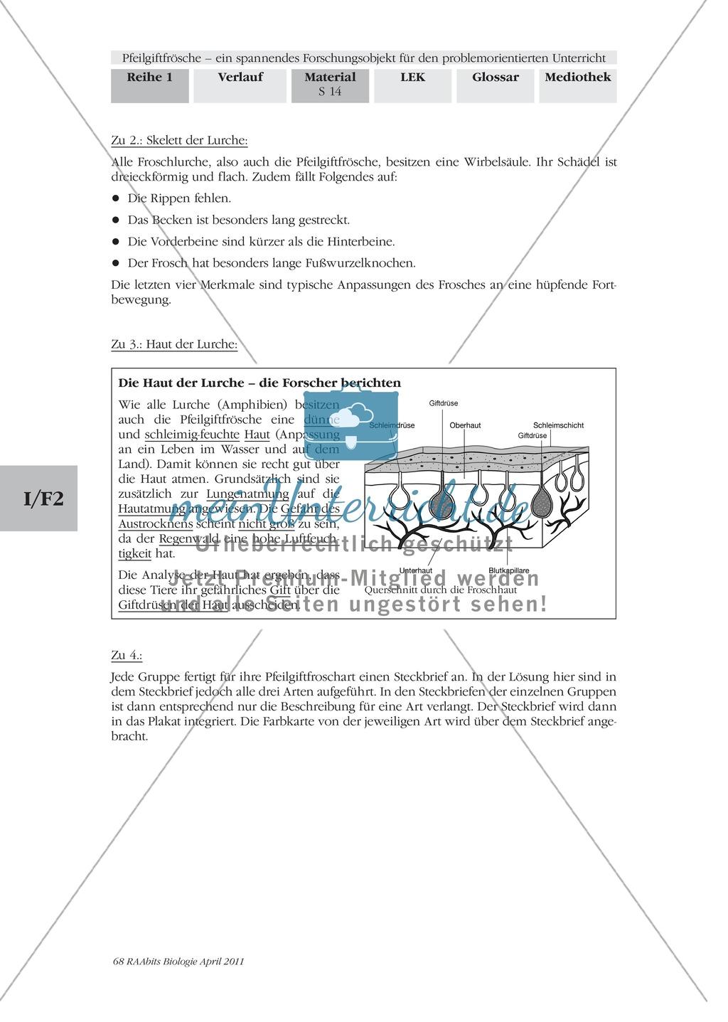 Merkmale und Eigenschaften von Fröschen am Beispiel von Pfeilgiftfröschen: Forschungsauftrag Preview 6